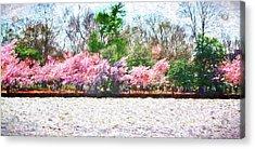 Cherry Blossom Day Acrylic Print