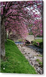 Acrylic Print featuring the photograph Cherry Blossom In Central Scotland by Jeremy Lavender Photography