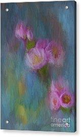 Cherry Blossom Acrylic Print by Jim  Hatch