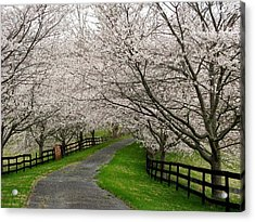 Cherry Blossom Lane Acrylic Print by Joyce Kimble Smith