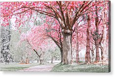 Acrylic Print featuring the photograph Cherry Blossom Path by Charline Xia