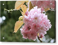 Acrylic Print featuring the photograph Cherry Blossom Secrets by Brandy Little