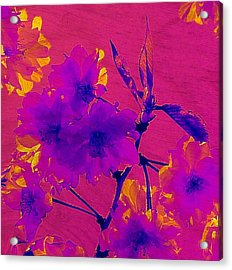 Cherry Blossom Series 3 Acrylic Print by Jen White