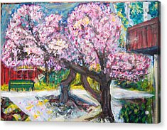 Cherry Blossom Time Acrylic Print by Carolyn Donnell