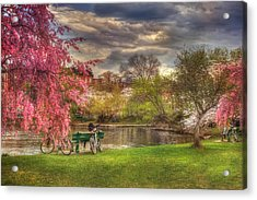 Cherry Blossom Trees On The Charles River Basin In Boston Acrylic Print