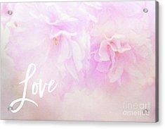 Cherry Blossom Valentine Acrylic Print