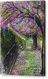 Cherry Blossom Walk Acrylic Print by Remy Francis