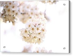 Acrylic Print featuring the photograph Cherry Blossoms - A by Anthony Rego