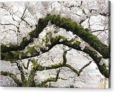 Cherry Blossoms 104 Acrylic Print