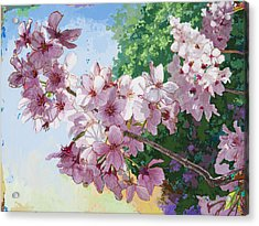 Cherry Blossoms #2 Acrylic Print