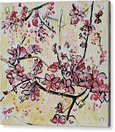 Cherry Blossoms 201751 Acrylic Print by Alyse Radenovic