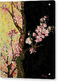 Cherry Blossoms 3 Acrylic Print by Timothy Clayton