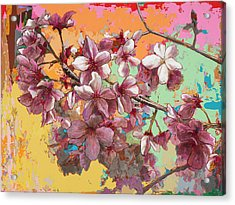 Cherry Blossoms #5 Acrylic Print