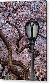 Acrylic Print featuring the photograph Cherry Blossoms At Central Park Nyc by Susan Candelario