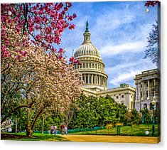 Cherry Blossoms At The Capitol Acrylic Print