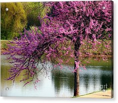 Acrylic Print featuring the photograph Cherry Blossoms By The Pond by Sue Melvin