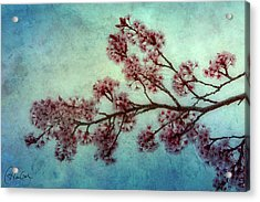 Cherry Blossoms Acrylic Print by Christine Hauber