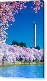 Cherry Blossoms Acrylic Print by Don Lovett