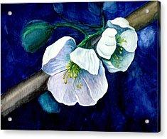 Cherry Blossoms Acrylic Print by Georgia Pistolis