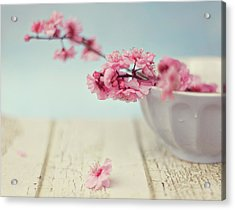 Cherry Blossoms In Bowl Acrylic Print by Hayley Johnson Photography