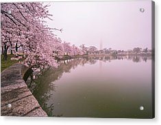 Cherry Blossoms In Fog Acrylic Print