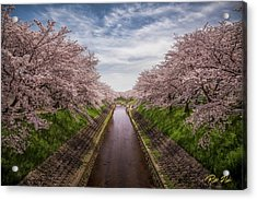 Acrylic Print featuring the photograph Cherry Blossoms In Nara by Rikk Flohr