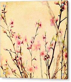 Cherry Blossoms Acrylic Print by Kim Fearheiley