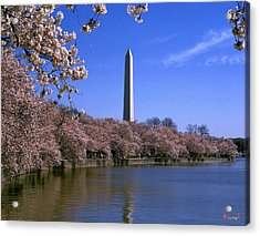 Acrylic Print featuring the photograph Cherry Blossoms On The Tidal Basin 15j by Gerry Gantt