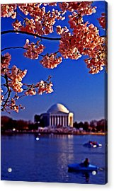 Cherry Blossoms On The Tidal Basin Acrylic Print