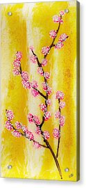 Cherry Blossoms Acrylic Print by Paul Tokarski