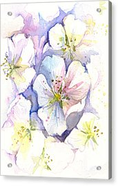 Cherry Blossoms Watercolor Acrylic Print