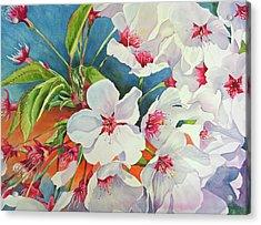 Cherry Blossomsa Acrylic Print