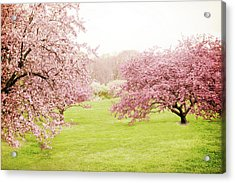 Acrylic Print featuring the photograph Cherry Confection by Jessica Jenney