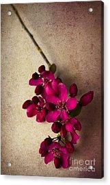 Cherry Pie Acrylic Print by Jan Bickerton