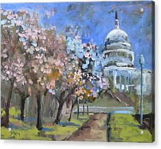 Cherry Tree Blossoms In Washington Dc Acrylic Print