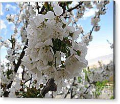 Acrylic Print featuring the photograph Cherry Tree by Cendrine Marrouat