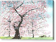 Cherry Trees Acrylic Print