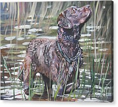 Chesapeake Bay Retriever Bird Dog Acrylic Print by Lee Ann Shepard