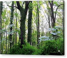 Chesapeake Oldgrowth Forest Acrylic Print