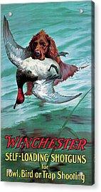 Chesapeake Retriever With Duck Acrylic Print