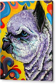 Acrylic Print featuring the painting Cheshire Alpaca  by Patty Sjolin