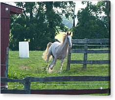 Acrylic Print featuring the photograph Chester On The Run by Donald C Morgan