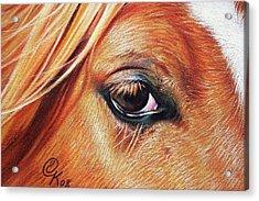 Chestnut Close-up Acrylic Print by Elena Kolotusha