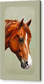 Chestnut Morgan Horse Phone Case Acrylic Print by Crista Forest