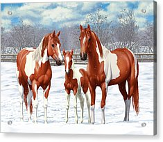 Chestnut Paint Horses In Winter Pasture Acrylic Print