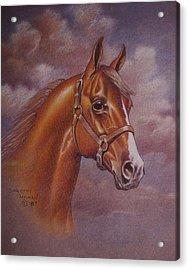 Chestnut Quarter Horse Acrylic Print by Dorothy Coatsworth