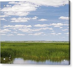 Acrylic Print featuring the photograph Cheyenne Bottoms by Rob Graham