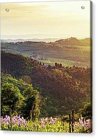 Chianti Italy Rolling Hillside At Sunset Acrylic Print