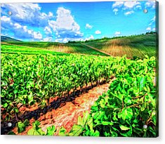Chianti Vineyard In Tuscany Acrylic Print by Dominic Piperata