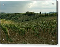 Chianti Vineyards In Tuscany Acrylic Print by Todd Gipstein
